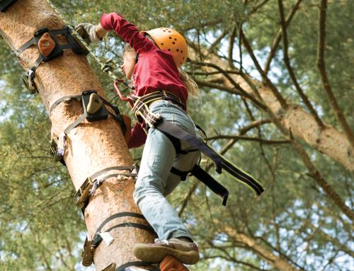 Monkey Climbing Station